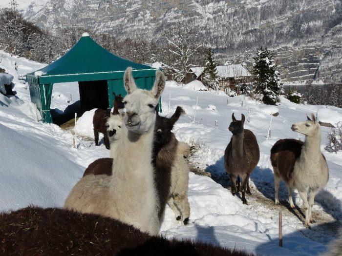 Winter-Quickie – Lamatour über dem Walensee
